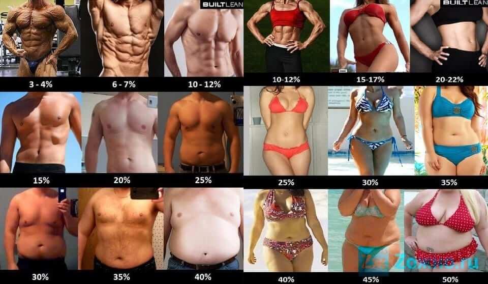 Сравнение процента жира таблица